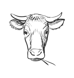 doodle cow vector image vector image