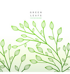 Green leaves floral decoration nature vector