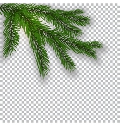 Two realistic green tree branch and its shadow vector