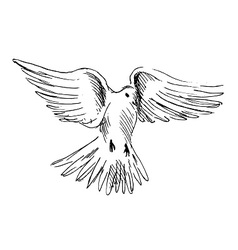 Hand sketch flying dove vector image