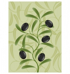 Olive branch vector