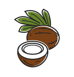 Delicious coconut with palm leaves isolated vector