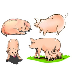 Sweety pig vector