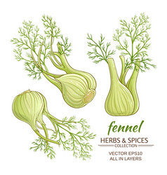 fennel set vector image