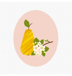Pear fruit and flower blossom spring healthy vector