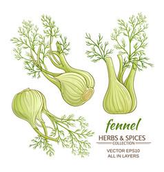 Fennel set vector