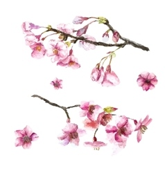 Hand drawn cherry blossoms vector