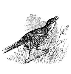 Saltmarsh sharp-tailed sparrow singing vector image