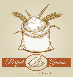 eco grains product sketch vector image vector image