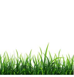 Green meadow background vector