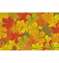 autumn horse chestnut leaves backgroun vector image vector image