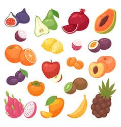 Fruits fruity apple banana and exotic vector
