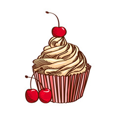 Cupcake with cherry isolated on white background vector