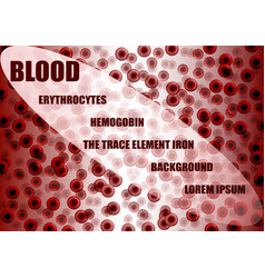 Blood erithrocytes background vector