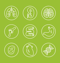 Human organs thin line icons set vector