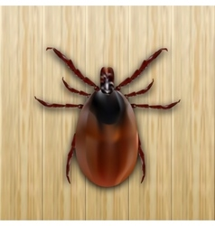 Red mite mite allergy epidemic mite parasites vector