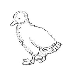 doodle duckling vector image