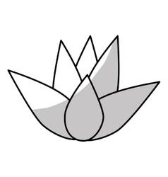 lotus flower icon vector image vector image