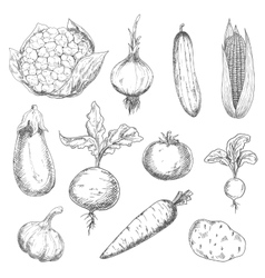 Fresh and ripe farm vegetables sketch icons vector image vector image