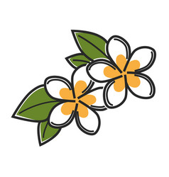 Aromatic vanilla flowers with green leaves vector