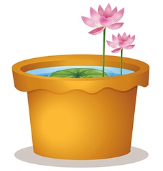 A pot with a waterlily and lotus flowers vector
