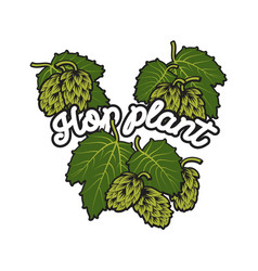 hand drawn hops plant vector image