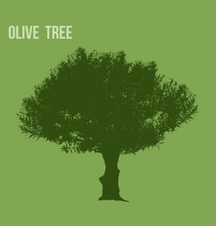 olive tree silhouette vector image
