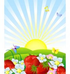 fresh strawberries vector image