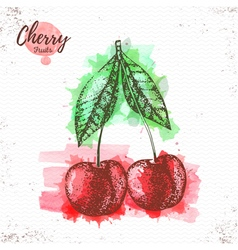 Watercolor cherry sketch vector