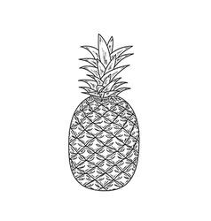 ananas sketch vector image vector image
