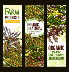 Farm grown cereals and grain banner set vector