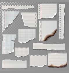 pieces of torn white lined notebook paper square vector image vector image