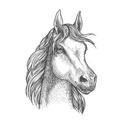 Scottish pony sketch for horse breeding design vector