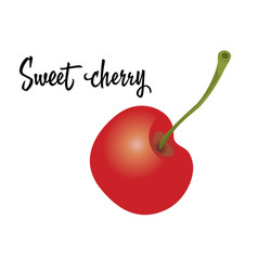 Cherry fruit isolated on white background vector