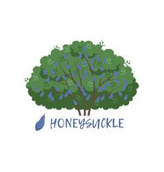 Honeysuckle garden berry bush with name vector