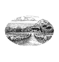 Vineyard by the sea vector
