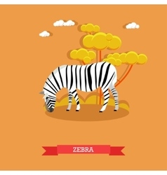 Cartoon zebra in flat style design vector