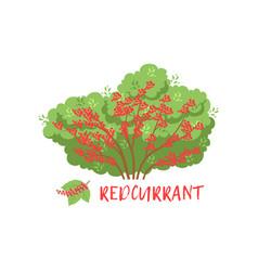 Redcurrant garden berry bush with name vector