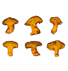 Various fungi chanterelle vector