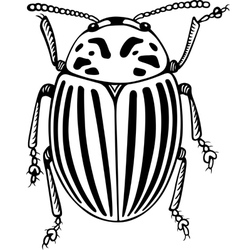 Colorado potato beetle vector image vector image