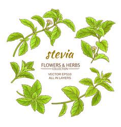 Stevia set vector