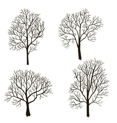 Trees without leaves silhouette vector
