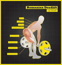 Antagonistic muscle exercises and Workouts vector image vector image