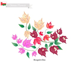 Bougainvillea Flowers The Native Flower of Oman vector image vector image