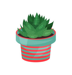 aloe houseplant potted plant vector image vector image
