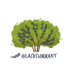 Blackcurrant garden berry bush with name vector