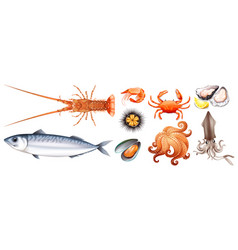 Different types of seafood vector