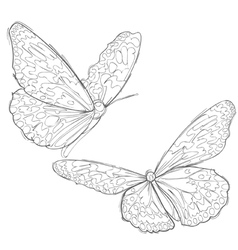 Contour drawing two butterflies vector