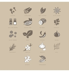 Spices set vector