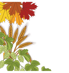 Leaves wheat hops bacground vector